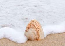 Shell sulla spiaggia Fotografie Stock