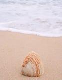 Shell sulla spiaggia Immagine Stock Libera da Diritti