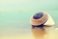 Shell sulla spiaggia Fotografia Stock