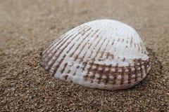 Shell sulla spiaggia Fotografia Stock Libera da Diritti
