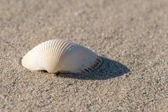 Shell sulla spiaggia - alti vicini, copiano lo spazio Fotografia Stock Libera da Diritti