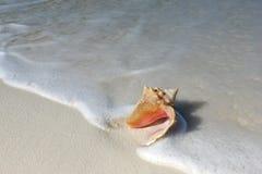 Shell sulla spiaggia di sabbia Fotografia Stock Libera da Diritti