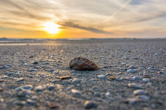 Shell in the sun Stock Photography