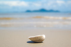 Shell sur la mer image stock