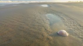 Shell sur la mer photo stock