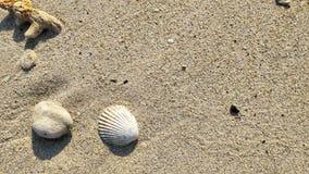 Shell sur la mer de plage photographie stock