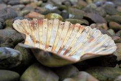 Shell sur la plage images stock