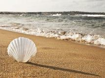 Shell sur la plage Photo stock