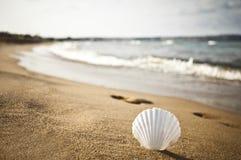 Shell sur la plage Photographie stock libre de droits