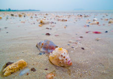 Shell sur la plage Images stock