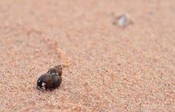 Shell sur la plage photographie stock