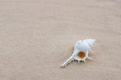 Shell sur la plage Photos libres de droits