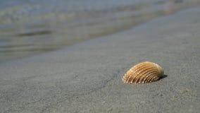 Shell sur la plage image libre de droits