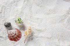 Shell sur la plage - copiez l'espace photographie stock libre de droits