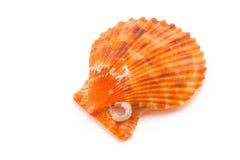 Shell sur le fond blanc photographie stock