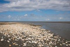 Shell sur le marais Photographie stock libre de droits