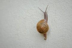 Shell sur le mur photographie stock