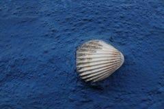 Shell sur le mur bleu images stock