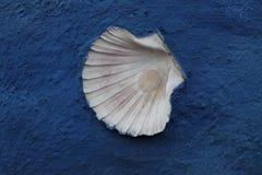 Shell sur le mur bleu photographie stock libre de droits
