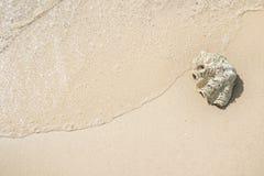 Shell sur le sable à la plage et à la vague photos libres de droits