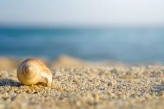 Shell sur le sable à la plage Mer bleue sur le fond photos libres de droits
