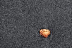 Shell sur le sable photographie stock libre de droits
