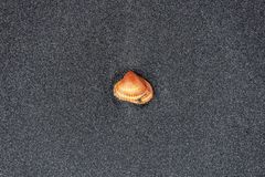 Shell sur le sable photos libres de droits