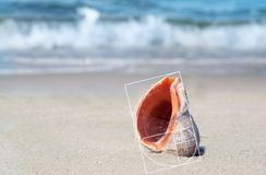 Shell sur le sable au bord de mer photographie stock
