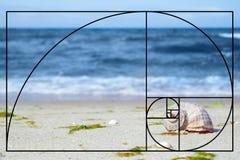 Shell sur le sable au bord de mer photos stock