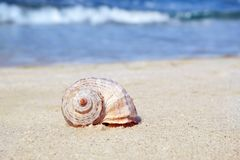 Shell sur le sable au bord de mer photographie stock libre de droits