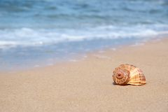 Shell sur le sable au bord de mer images stock