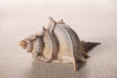 Shell sur le sable avec l'espace de copie pour votre texte photo libre de droits