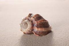 Shell sur le sable avec l'espace de copie pour votre texte image libre de droits
