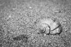 Shell sur le sable humide à b/à W images stock