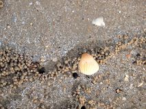 Shell sur le sable images stock