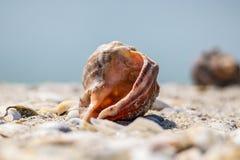 Shell sur le sable sous le ciel bleu photo stock