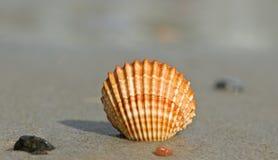 Shell sur un sable photo libre de droits