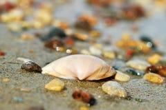 Shell sur un sable photos libres de droits