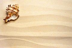 Shell sur un sable onduleux photos stock