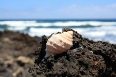 Shell sur une roche Photo stock