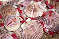 Shell Symbol de Camino de Santiago Imagenes de archivo