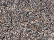 Shell tło zdjęcie stock