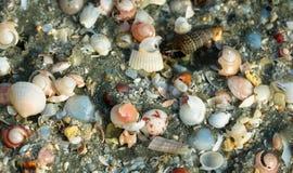 Shell tapezieren lizenzfreie stockbilder
