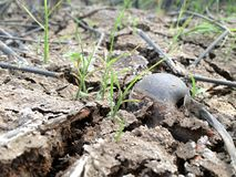 Shell, terre sèche avec la coquille images stock