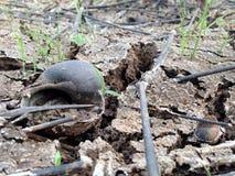 Shell, terre sèche avec la coquille photos libres de droits