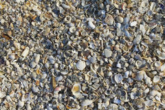 Shell texture. The surface and texture of seashell Stock Image