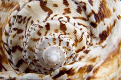Shell texture Royalty Free Stock Photography