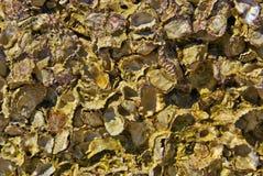 Shell texture Stock Photos