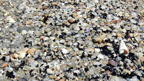Shell texture. Shell on the beach showing grain and texture Royalty Free Stock Image
