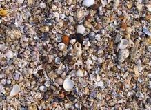Shell textuur stock afbeelding